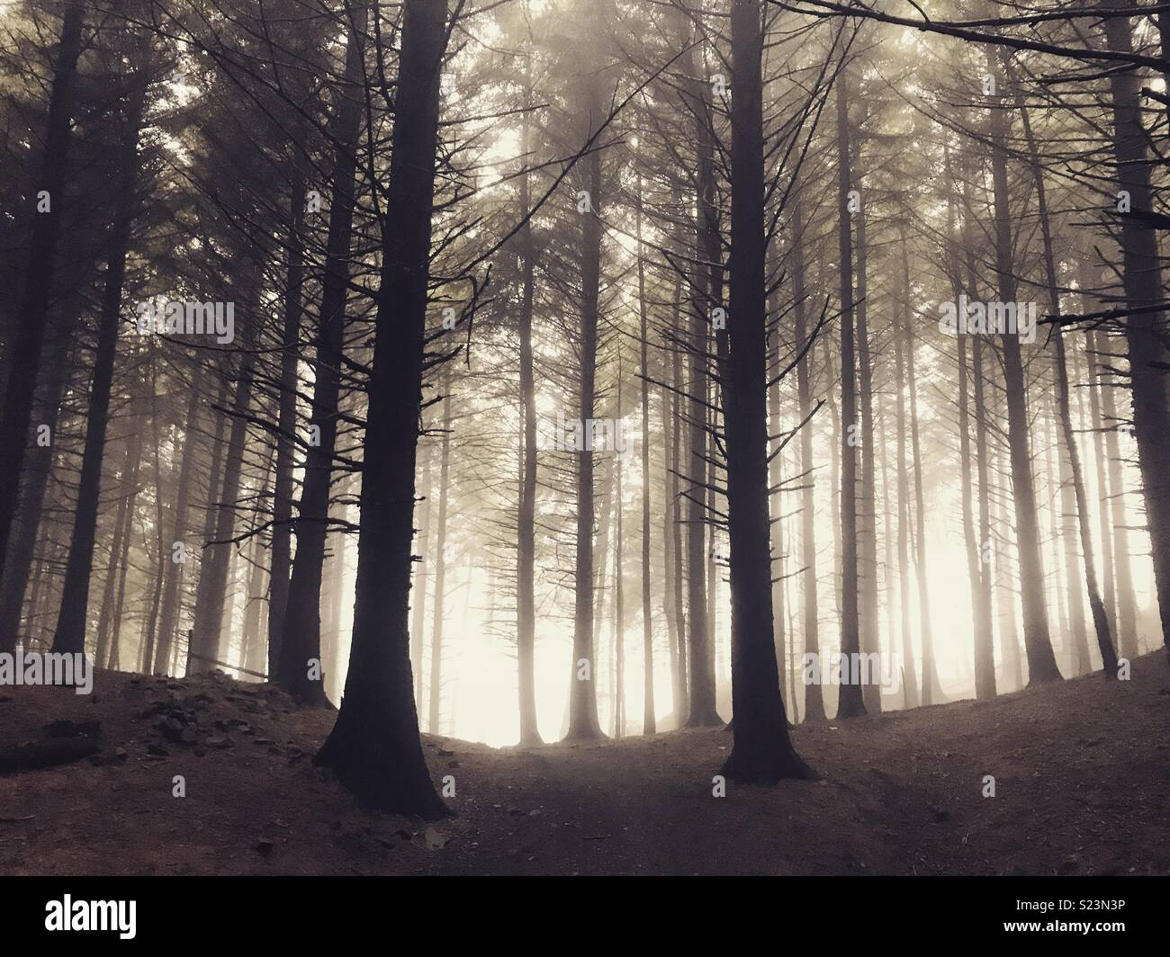 Macclesfield forest - Stock Image