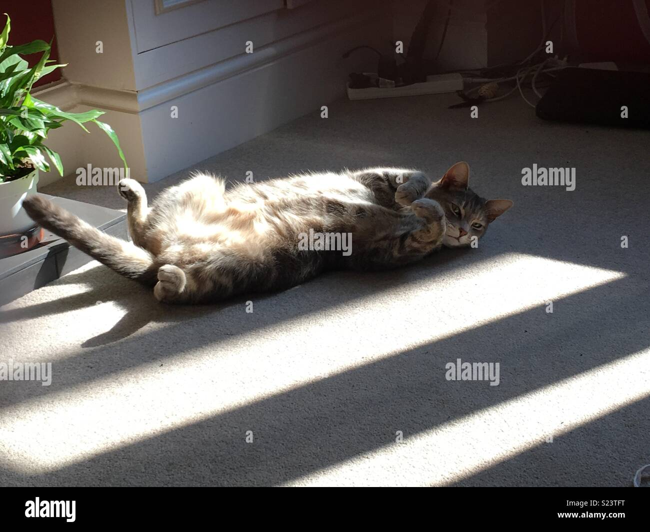 Cat basking in the sunlight - Stock Image