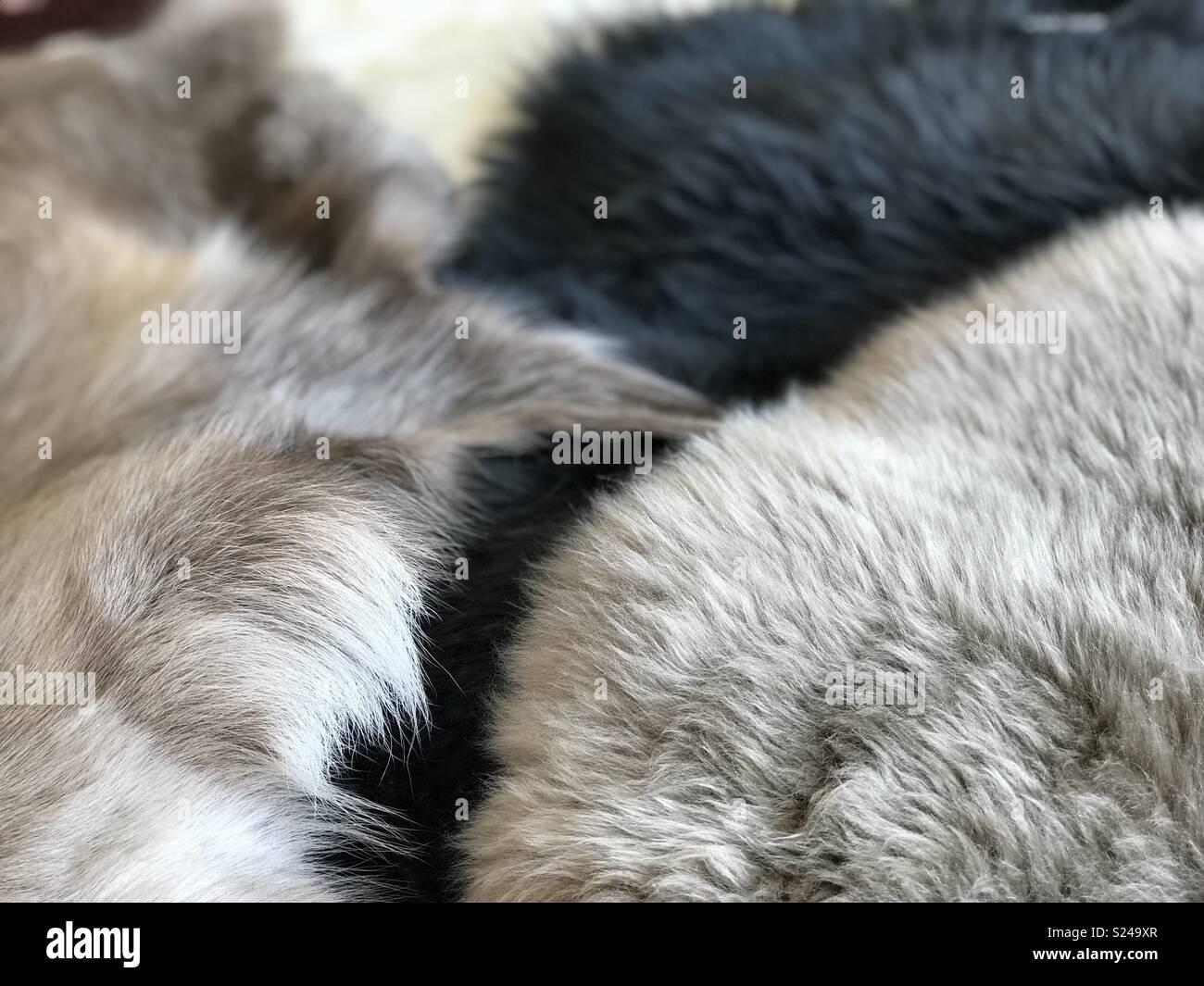Animal skin fur hides - Stock Image