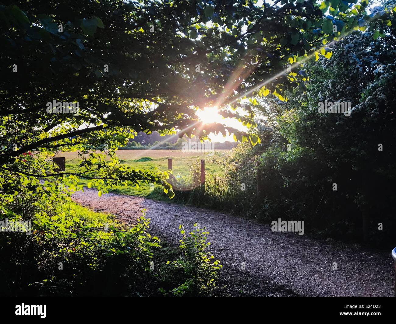 Country park walk at sunset - Stock Image