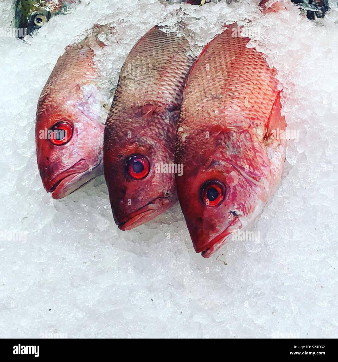 Red snapper fish on ice, st Lawrence market, Toronto Stock Photo