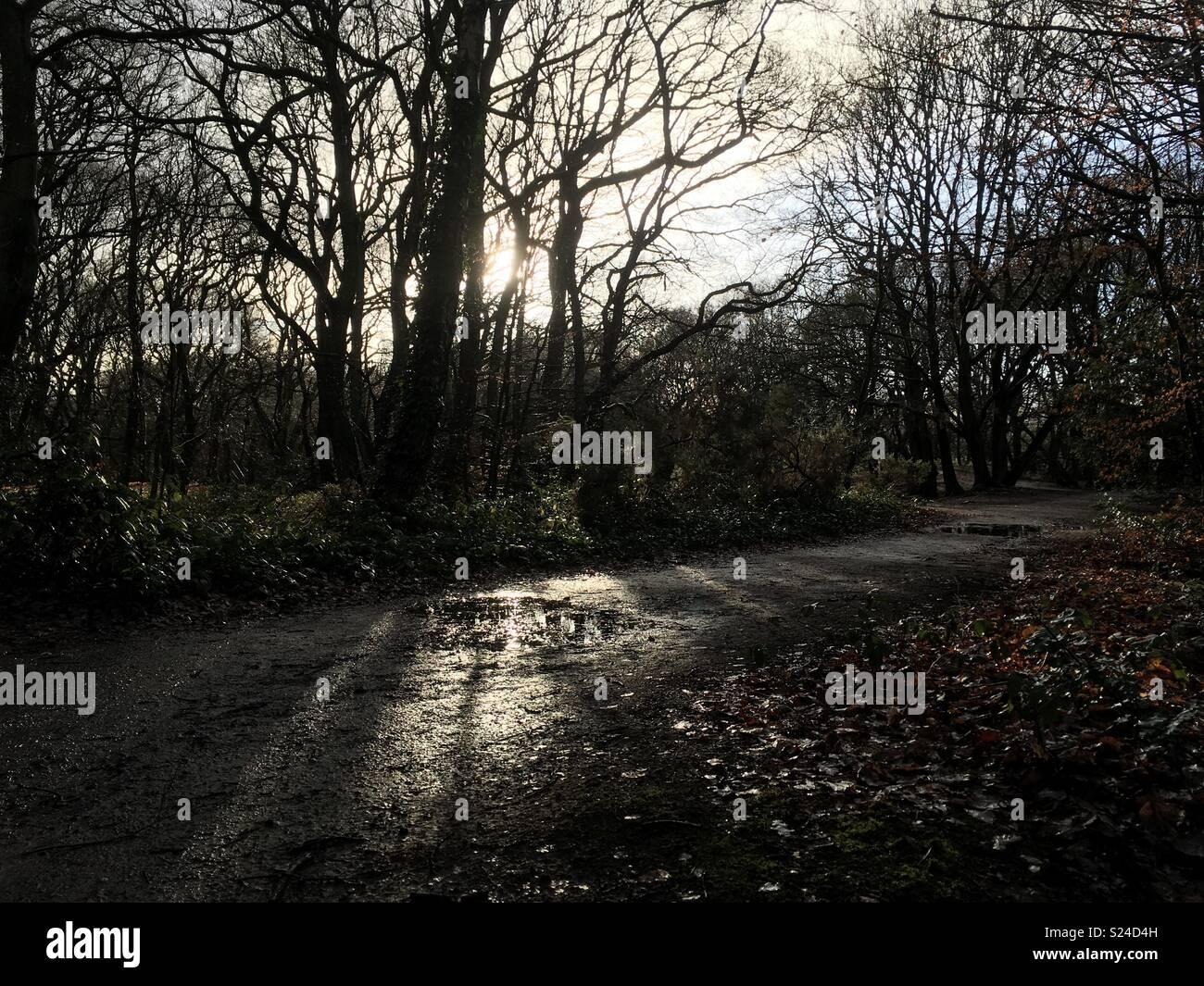 Hampstead Heath - Stock Image