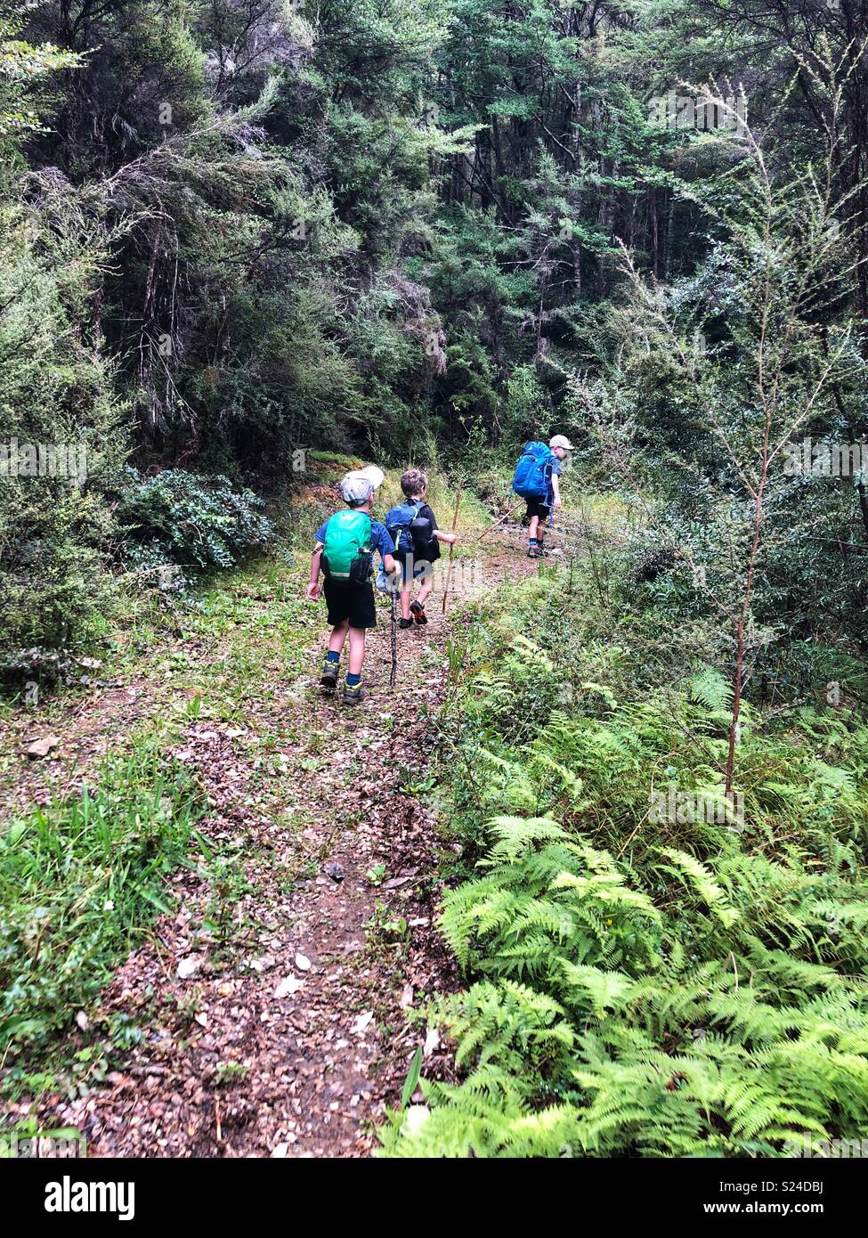 Three boys walking on track, Red Hills, Richmond Forest Park, New Zealand - Stock Image