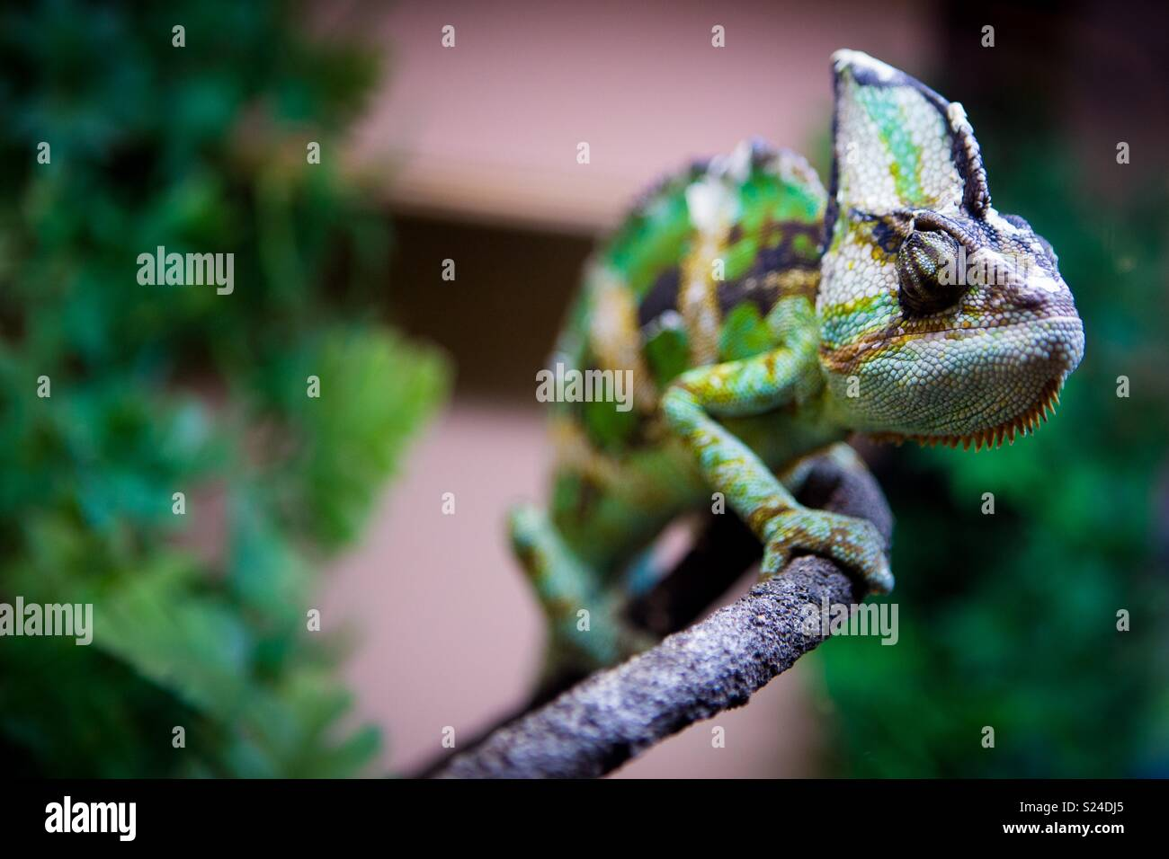 Created chameleon on a branch - Stock Image