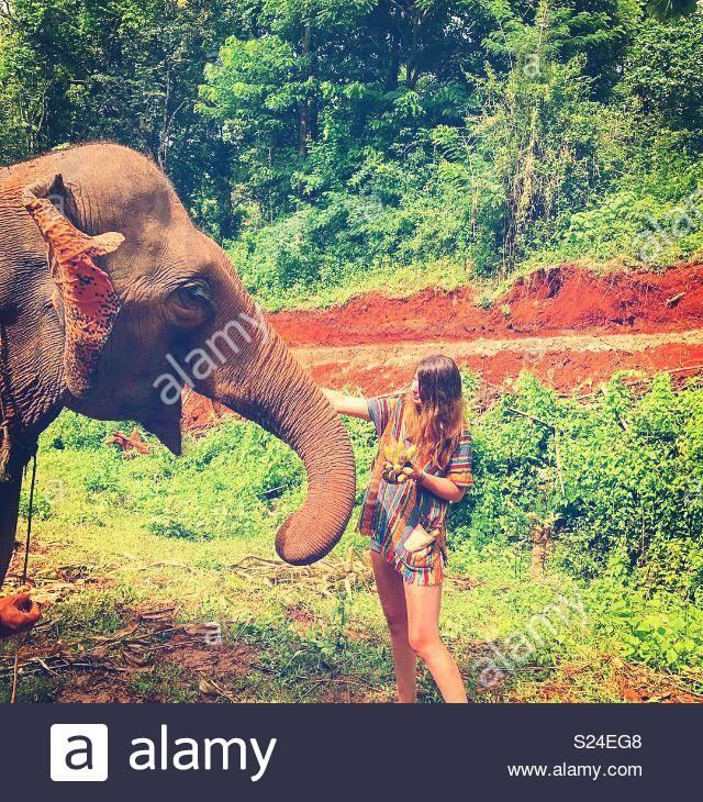 Happy Elephant - Stock Image