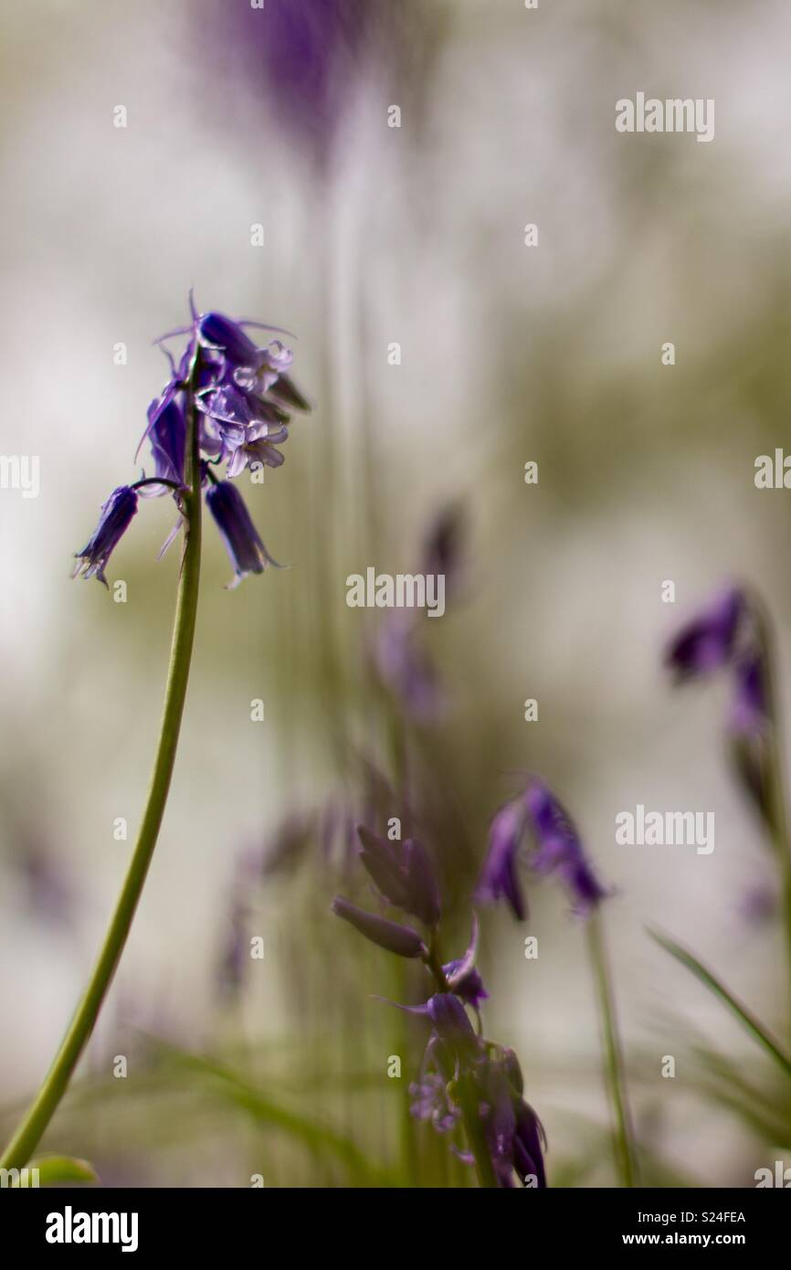 Thinking Of You In This Sad Time Stock Photo 311115906 Alamy