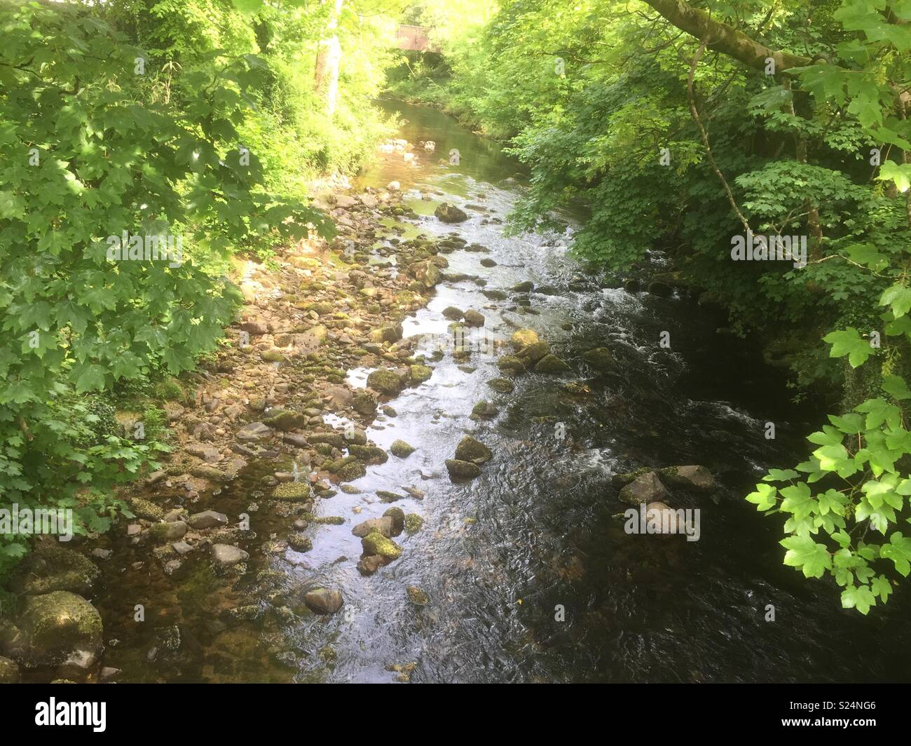 The River Erme, Ivybridge - Stock Image