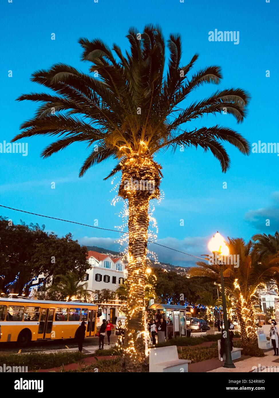 palm tree decorated with christmas lights at dusk funchal madeira
