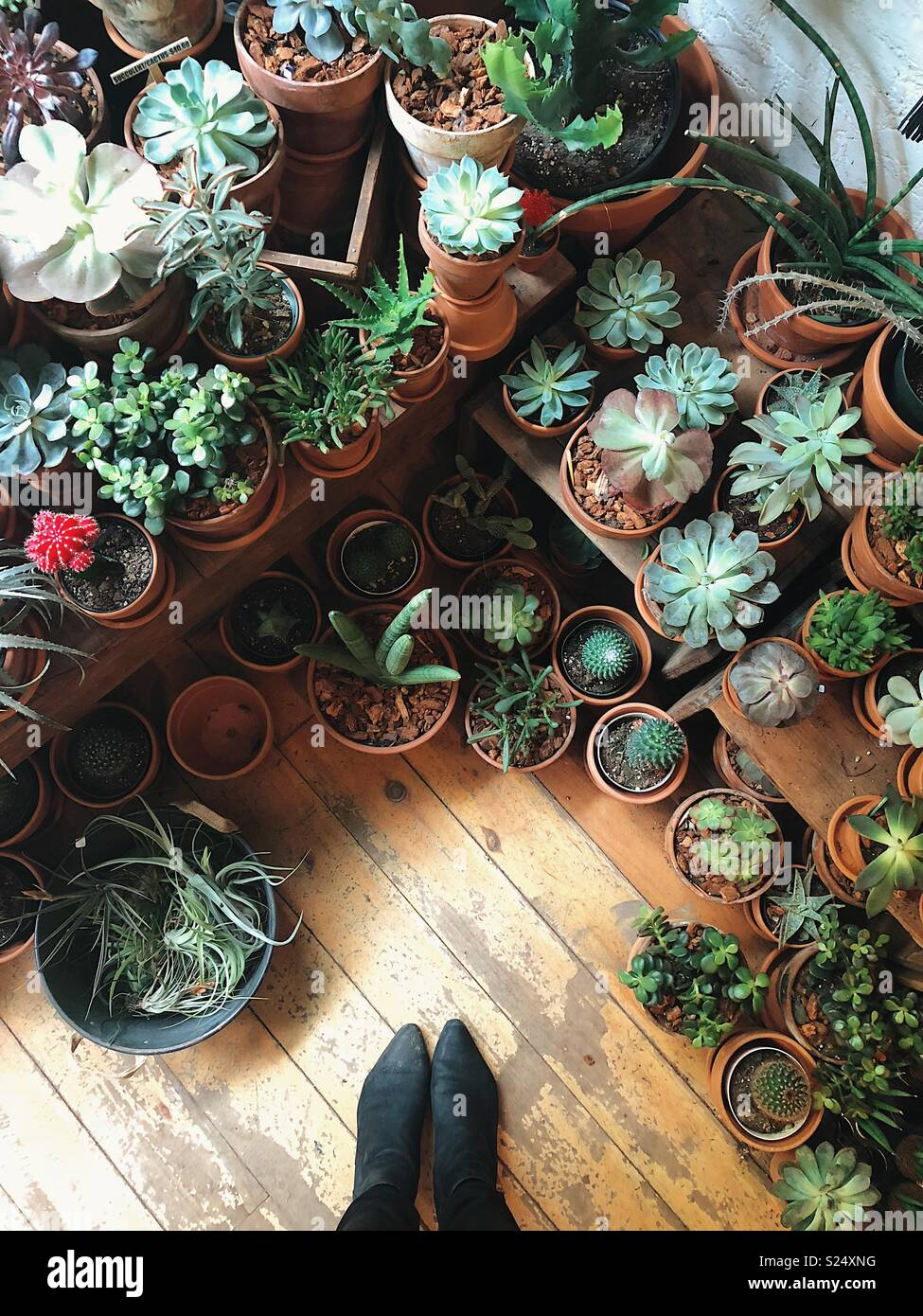 A cute plant store in SoHo - Stock Image