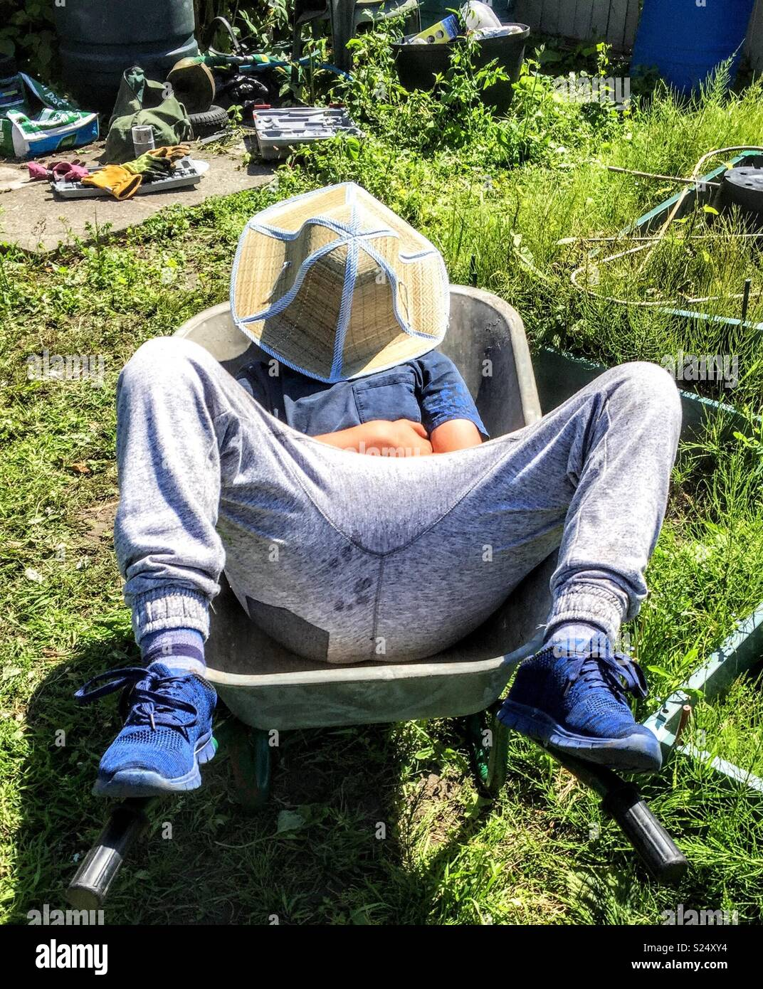 Asleep in a wheelbarrow - Stock Image