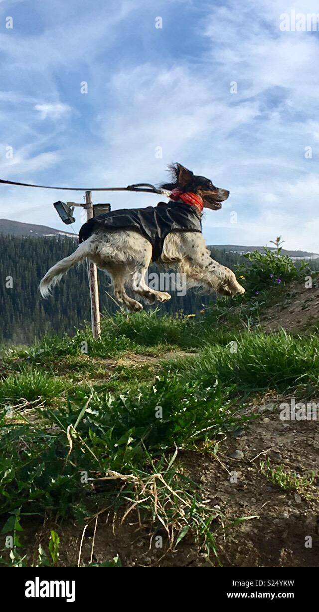 Dog flys over hill - Stock Image