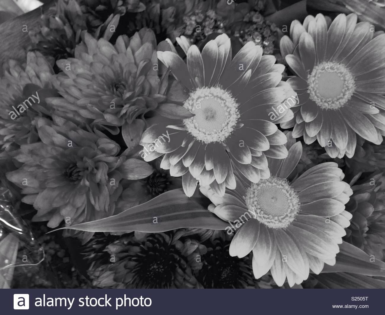 Big Petal Flowers Stock Photos Big Petal Flowers Stock Images Alamy