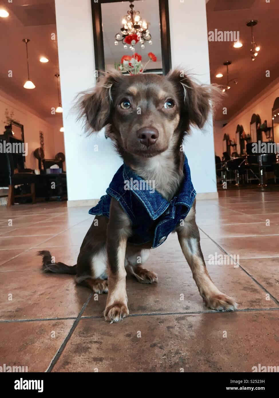 Dapper Dog - Stock Image