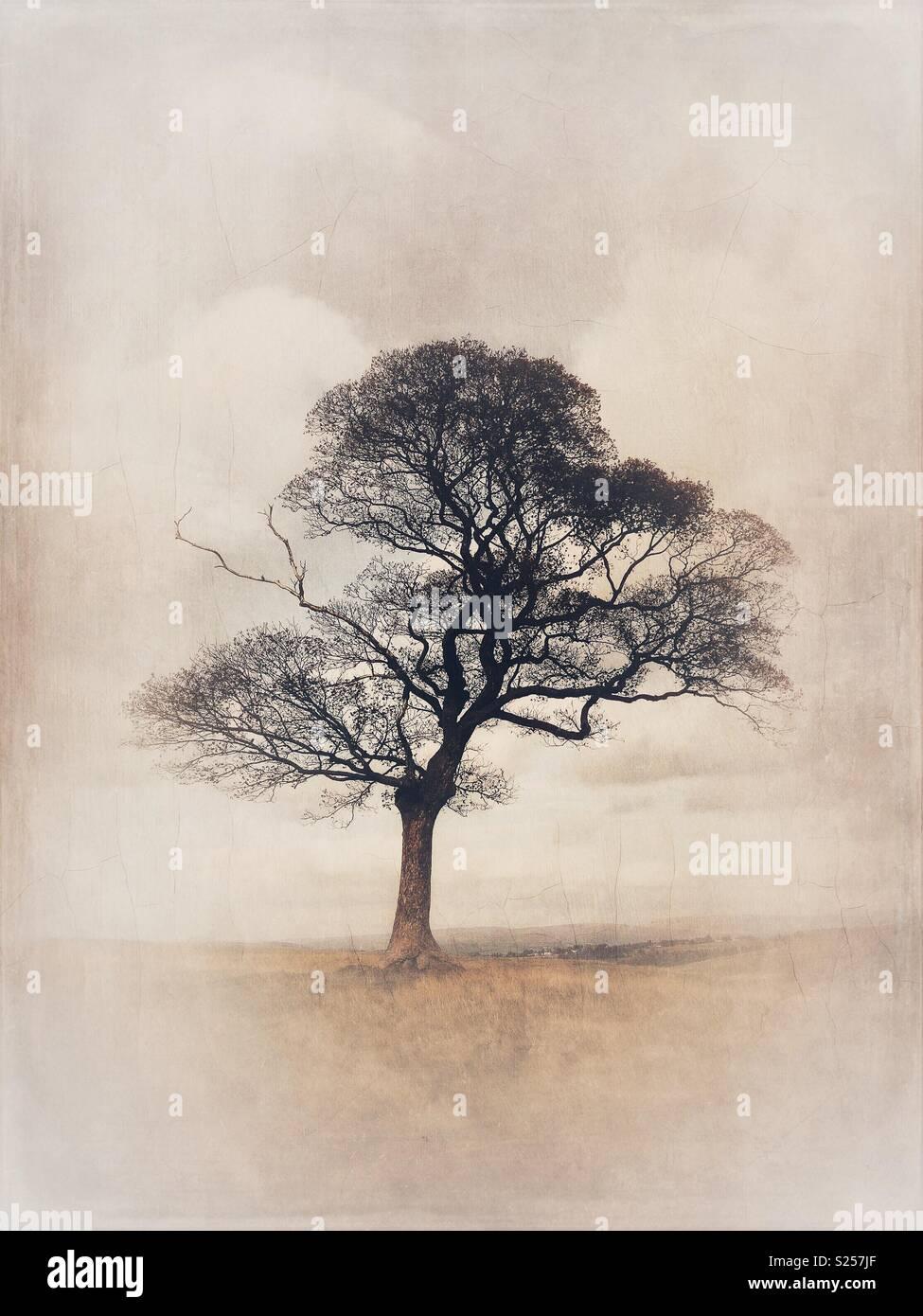 Lone tree - Stock Image