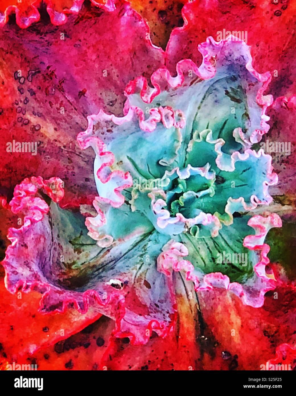 Succulent - Stock Image
