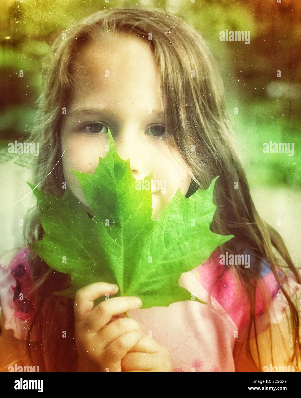 Portrait of a young girl with long brown hair holding a large green maple leaf - Stock Image