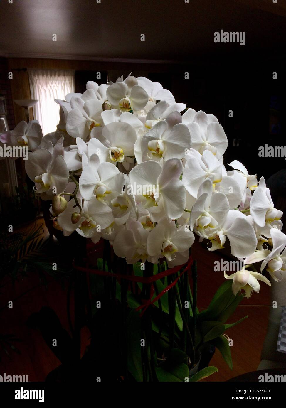 Orquídeas High Resolution Stock Photography And Images Alamy