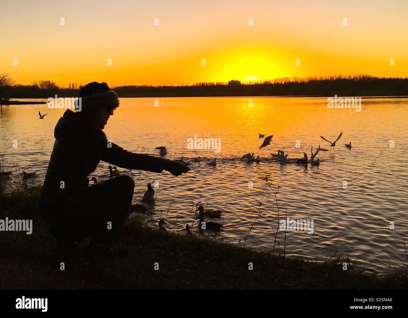 Lady with hat feeding birds at Willen Lake Milton Keynes at sunset - Stock Image