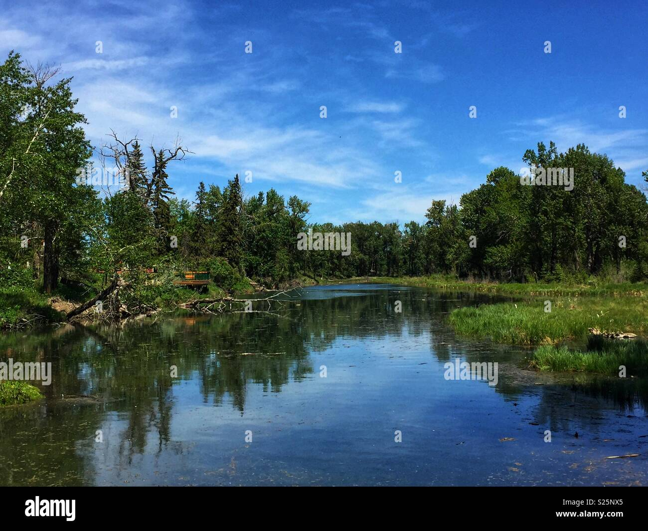 Lagoon in Inglewood Bird Sanctuary,Calgary,Alberta, Canada Stock Photo
