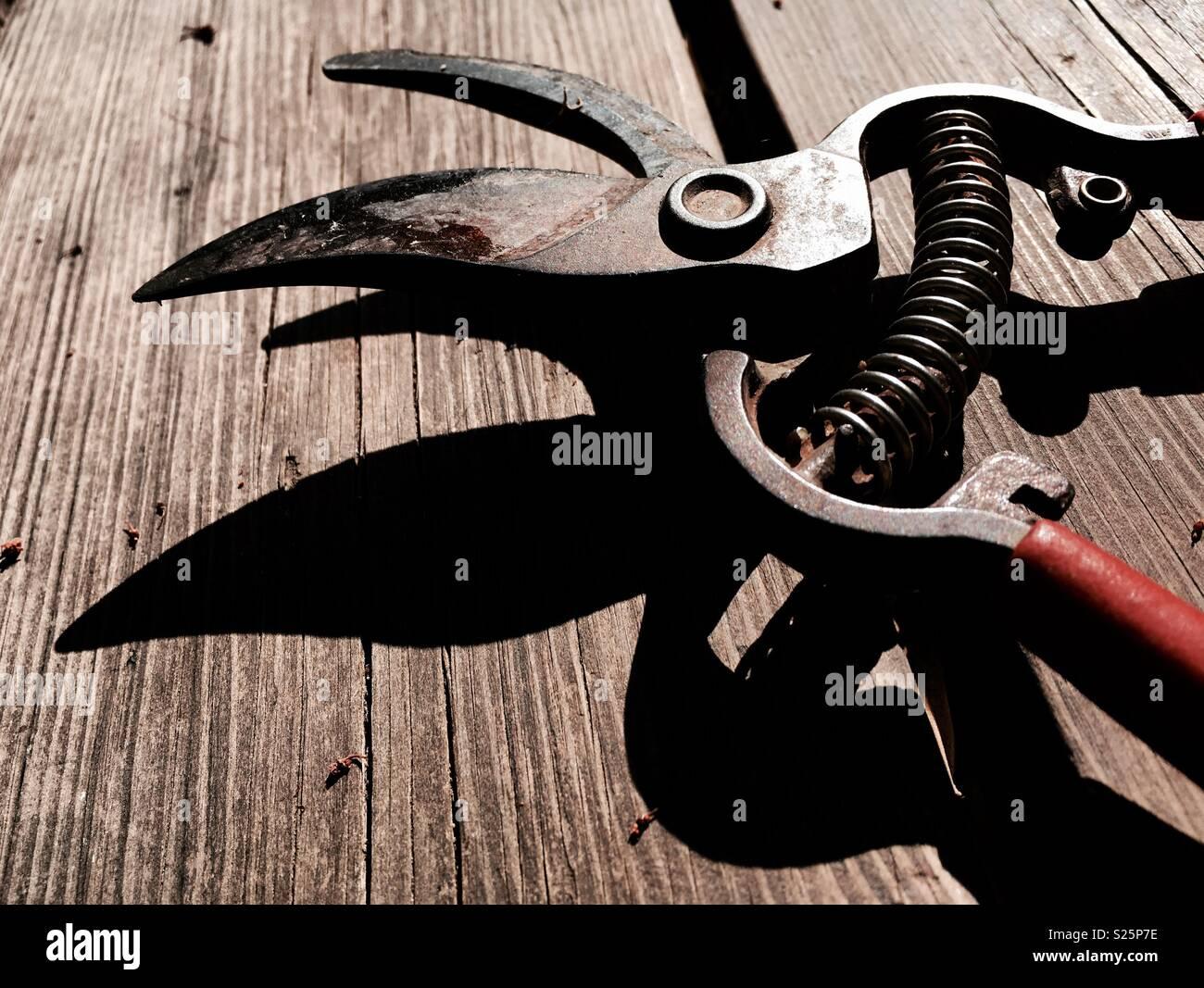 Garden hand pruners secateurs - Stock Image