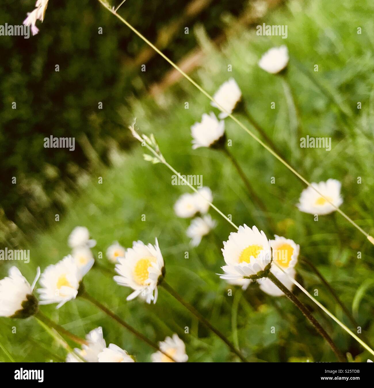 Pretty Little Flowers Stock Photos Pretty Little Flowers Stock
