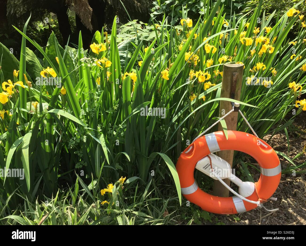 Beside a pond- orange and white life  saver ring and yellow flags irises - Stock Image
