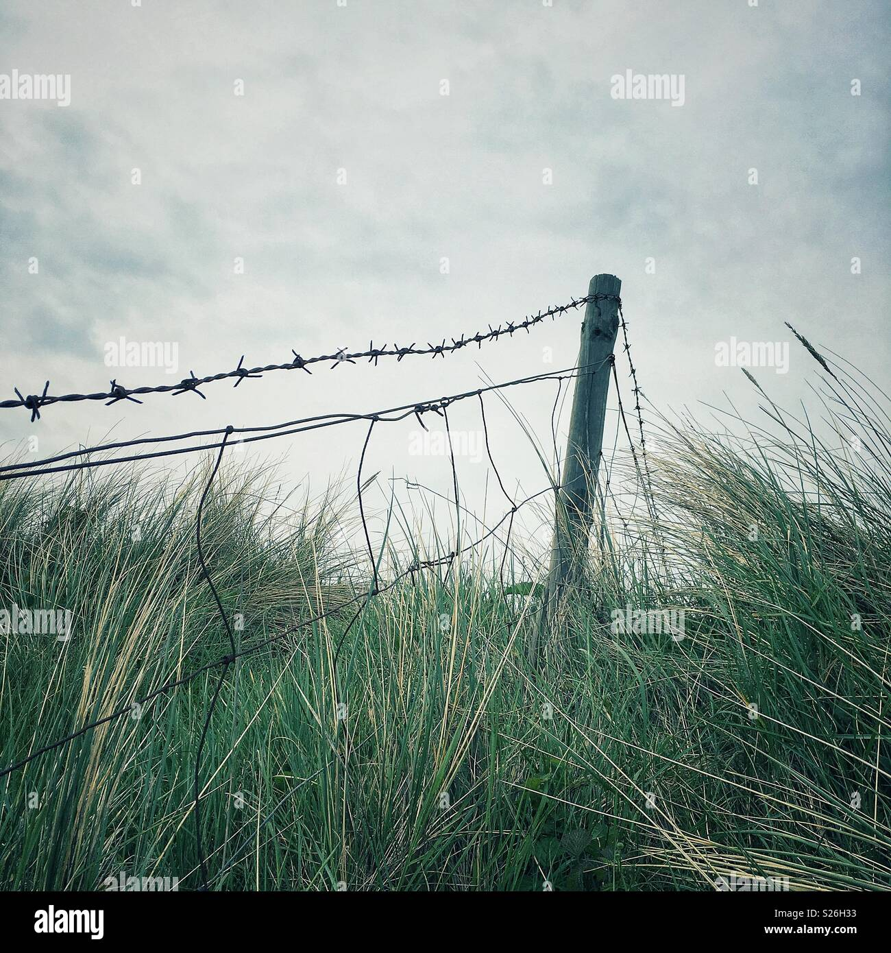 Wooden fence post and barbed wire set in grassy sand dunes Stock ...