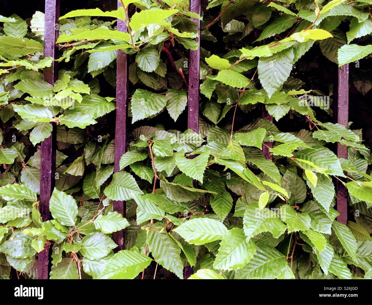 Fenced Healthy Green Foliage - Stock Image