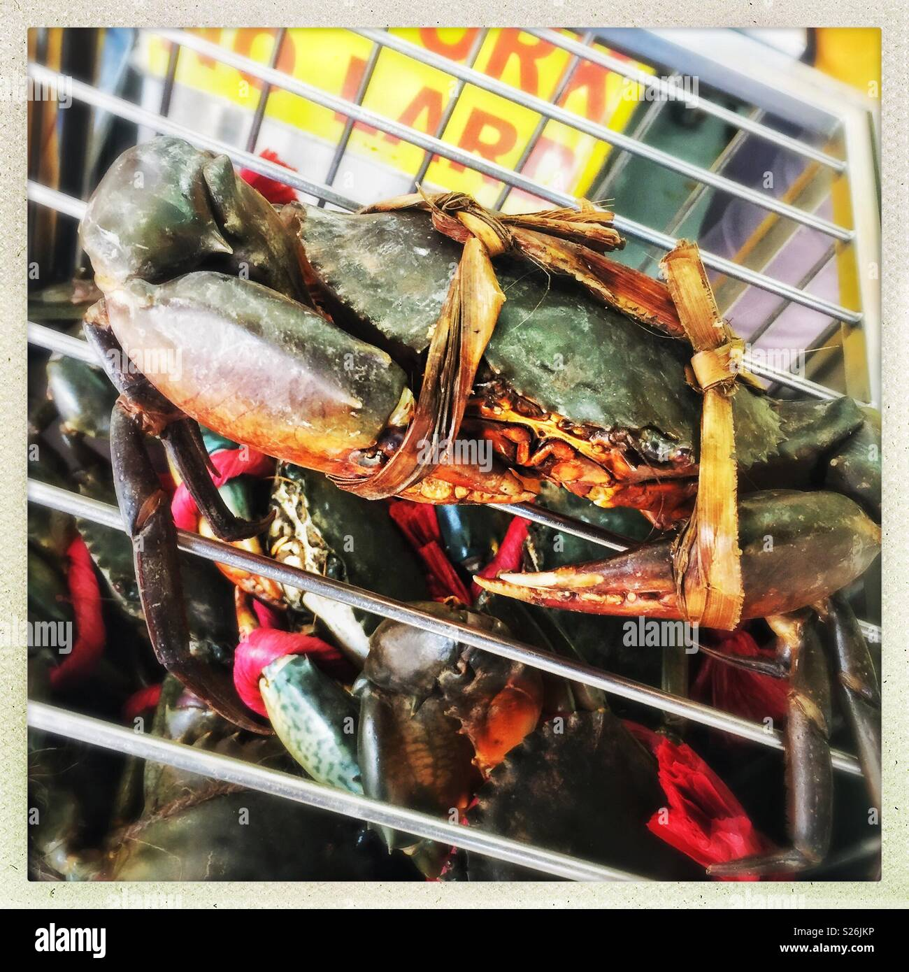 Live mud crab selected for cooking at East Coast Lagoon Food Village, a hawker food market in Singapore - Stock Image