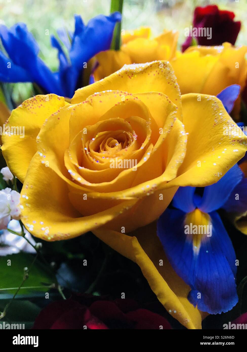 Yellow Roses In A Bouquet With Blue Purple And Red Flowers Stock Photo Alamy