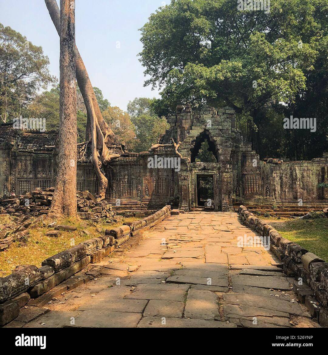 Angkor wat temple ruins. Path leading to archway with a tall tree and empty scene - Stock Image