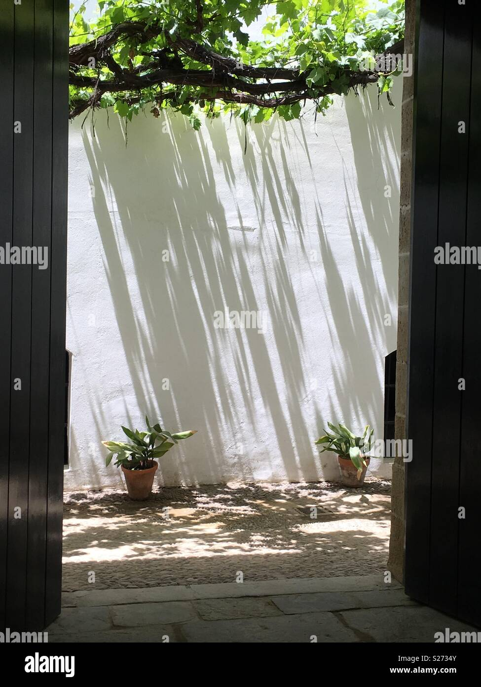 In the shade,  solitary pot plants - Stock Image