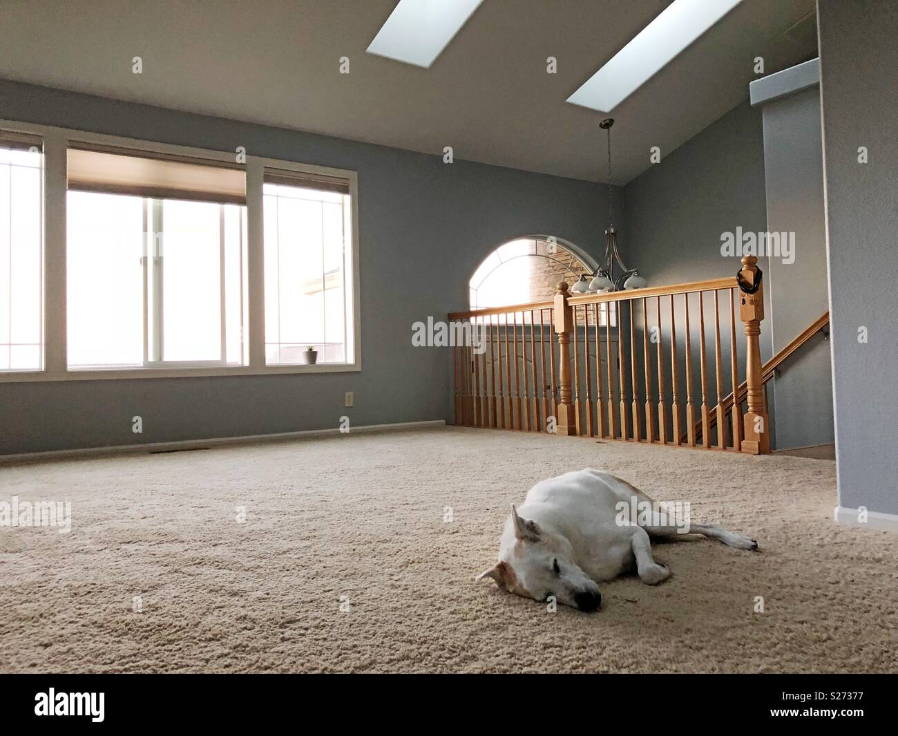 A dog sleeping in an empty house. - Stock Image