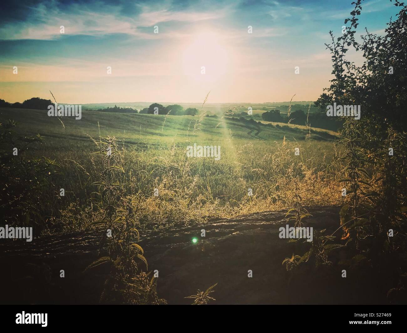 English countryside summer evening sunset - Stock Image