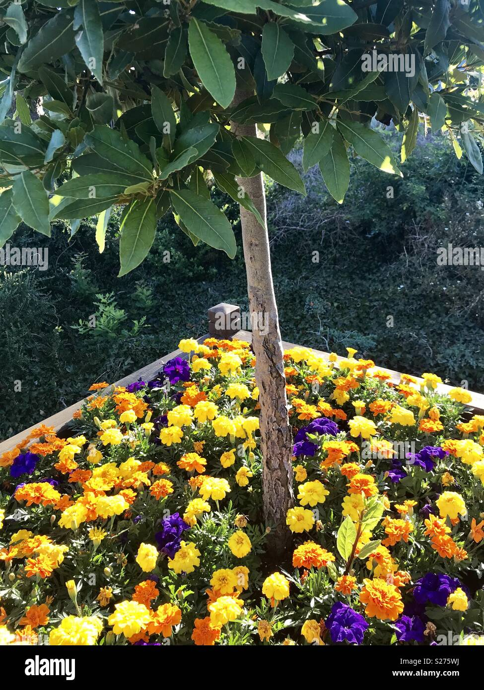 Small Tree Flower Bed In Bristol Stock Photo Alamy