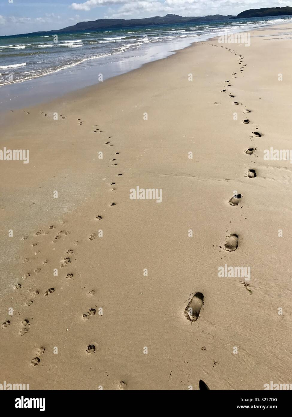 Foot / paw prints in the sand - Stock Image
