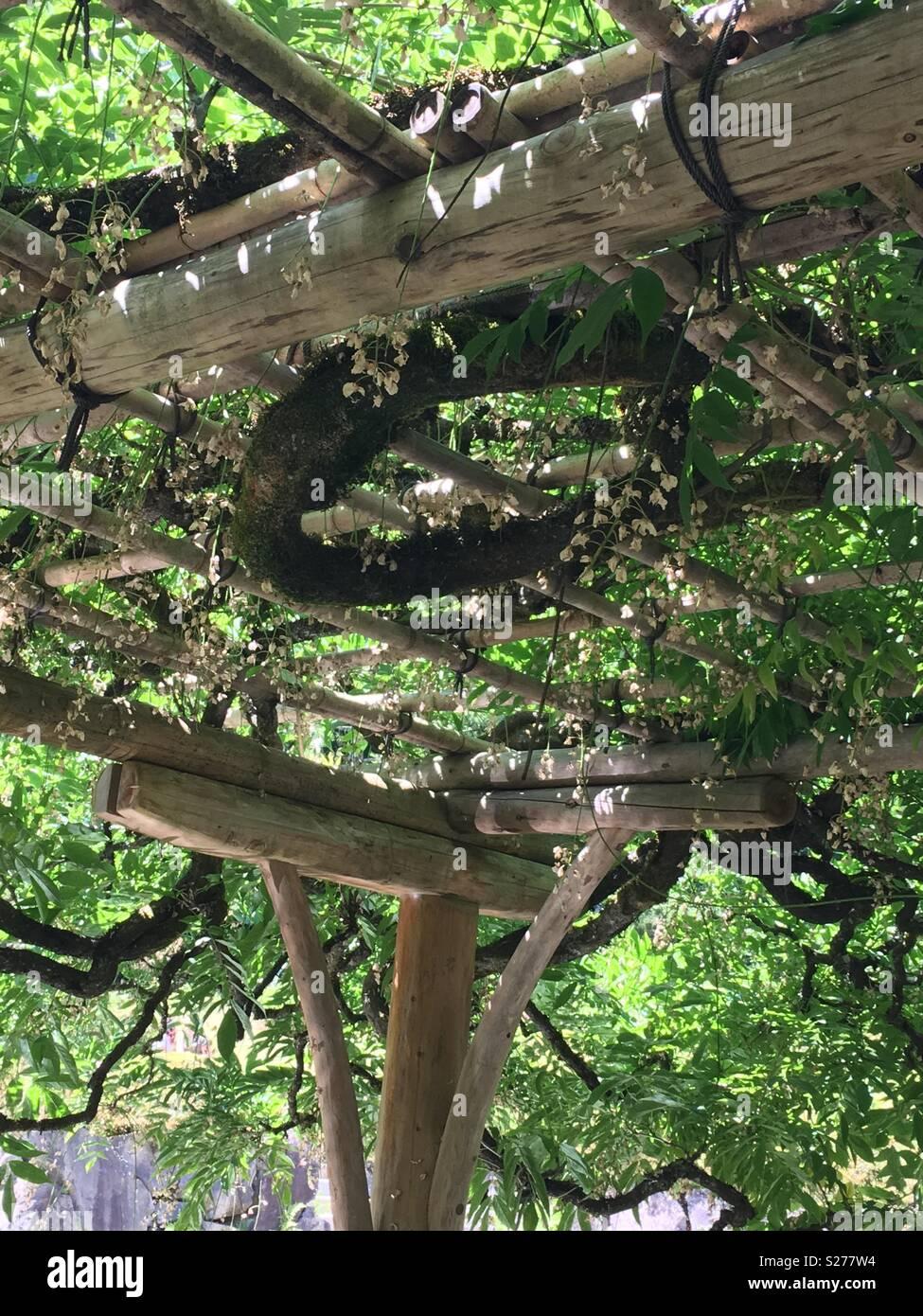 grape vine pergola on a warm sunny day - Stock Image