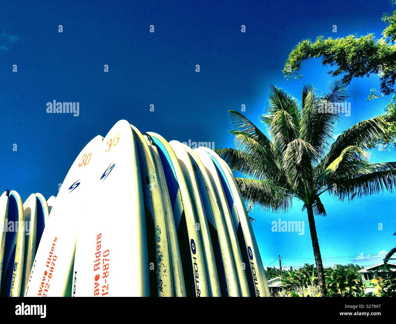 Surfboards await under tropical palms for the next eager riders in north shore Kauai, Hawaii paradise - Stock Image