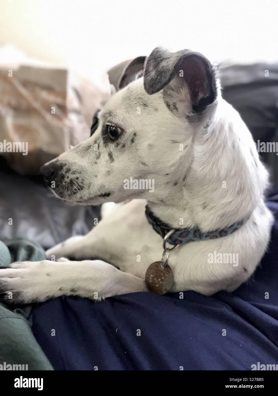 Love them dog cuddles - Stock Image