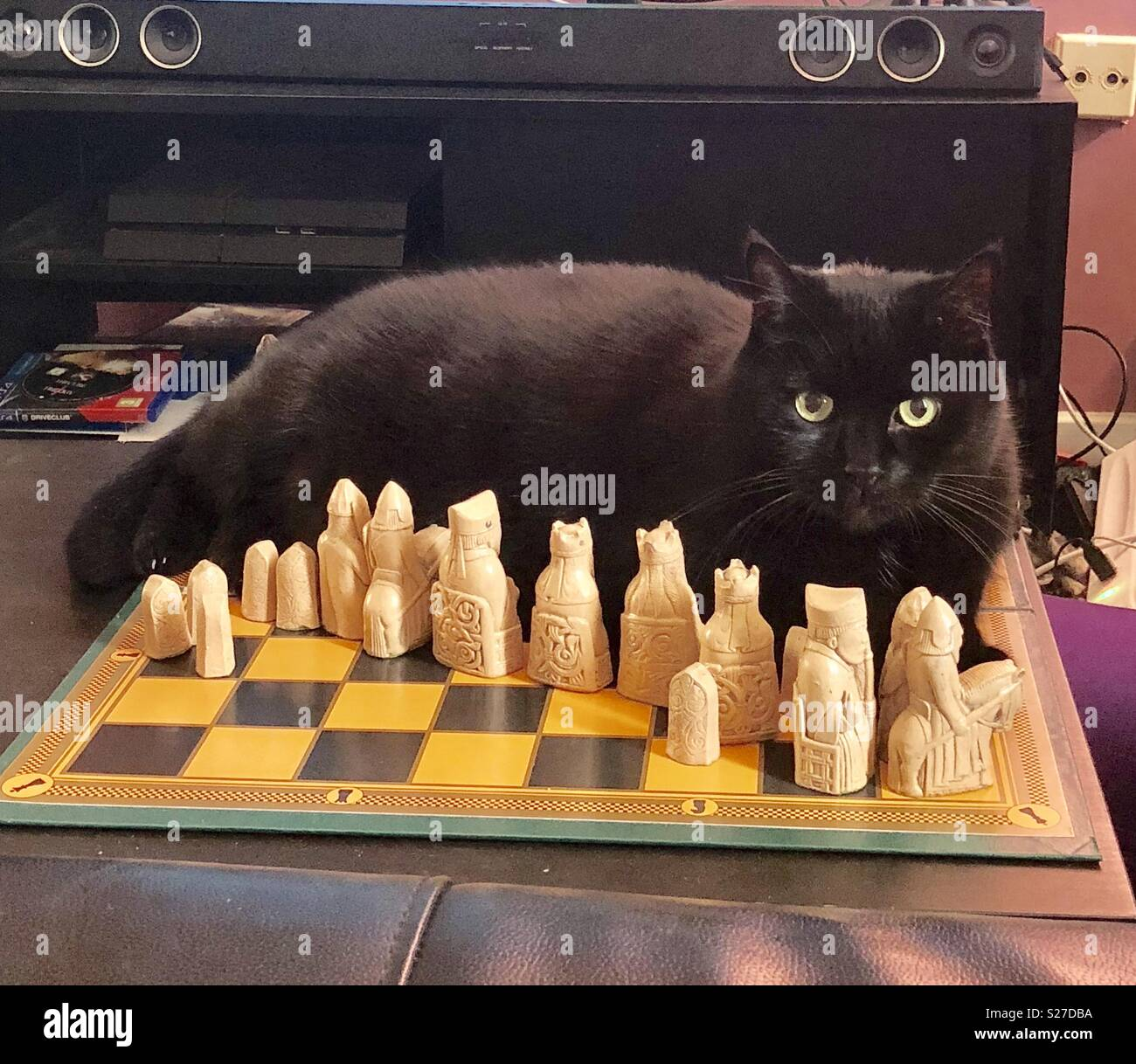 Black cat lying on chess board with Lewis Chessmen - Stock Image