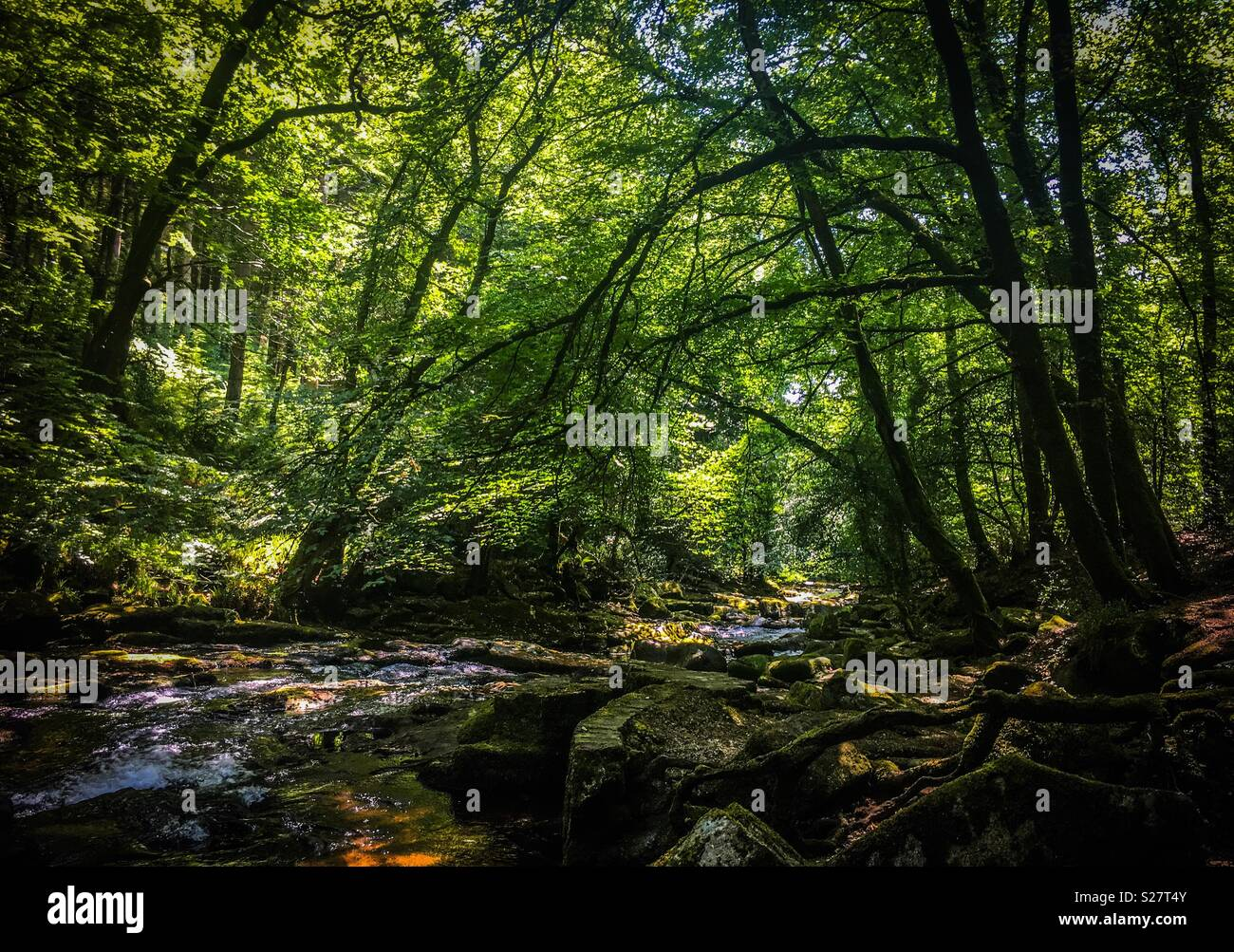 A cool place to walk during the heat of mid summer next to the River Erme, Ivybridge, Devon UK. - Stock Image