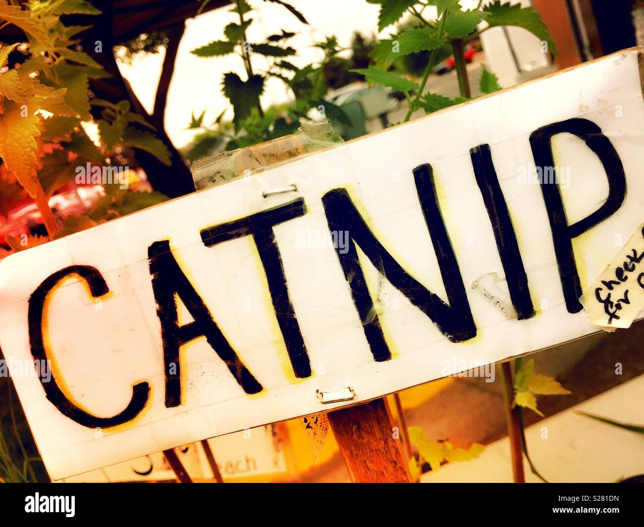 Sign at farmers market selling catnip, USAA - Stock Image