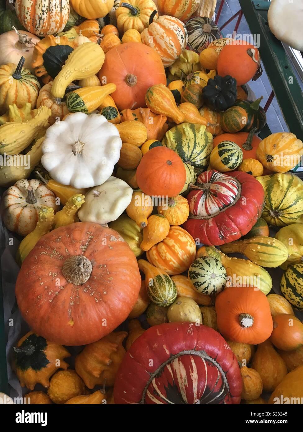 Cart of pumpkins - Stock Image