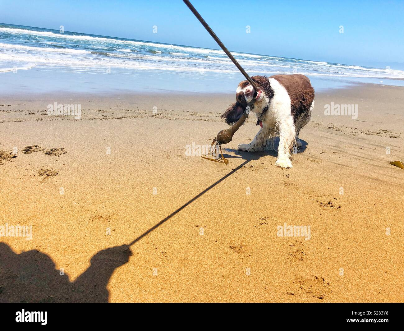 Giddy Stock Photos & Giddy Stock Images - Alamy