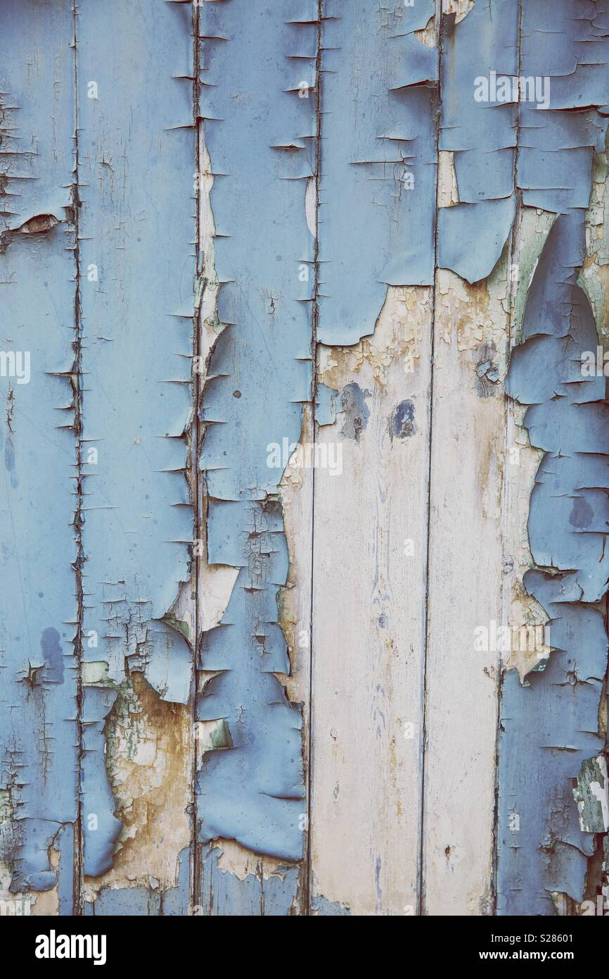 A textured background of peeling and blistering blue paint on rotten planks of wood with copy space - Stock Image