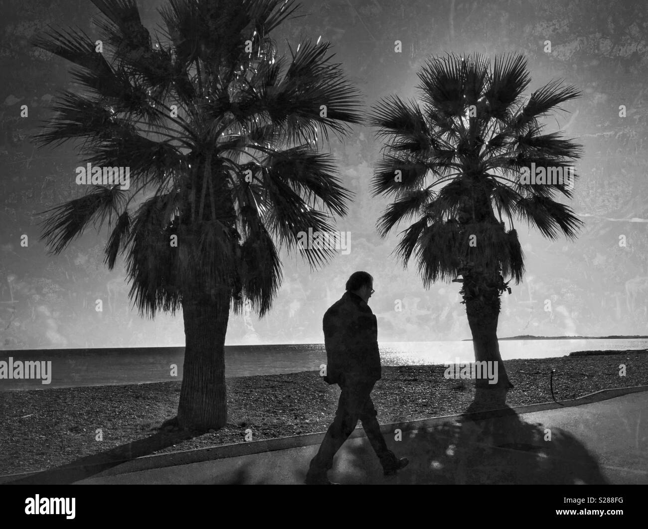 A lone man walks along a path next to two palm trees. An image that evokes feelings of loneliness and vulnerability. Photo Credit - © COLIN HOSKINS. - Stock Image