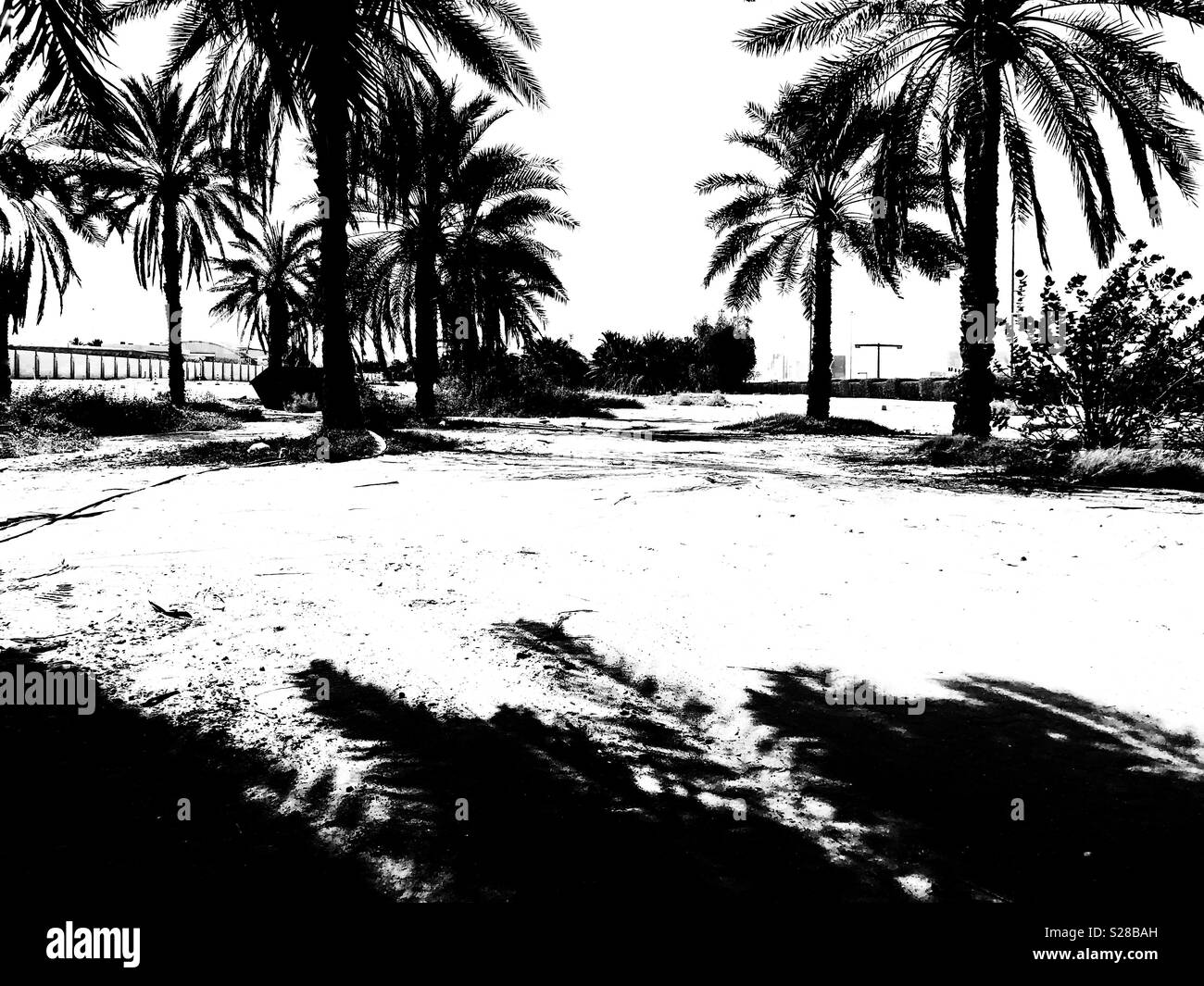 Hot summer midday Shadows of Palm trees in Abu Dhabi, UAE - Stock Image