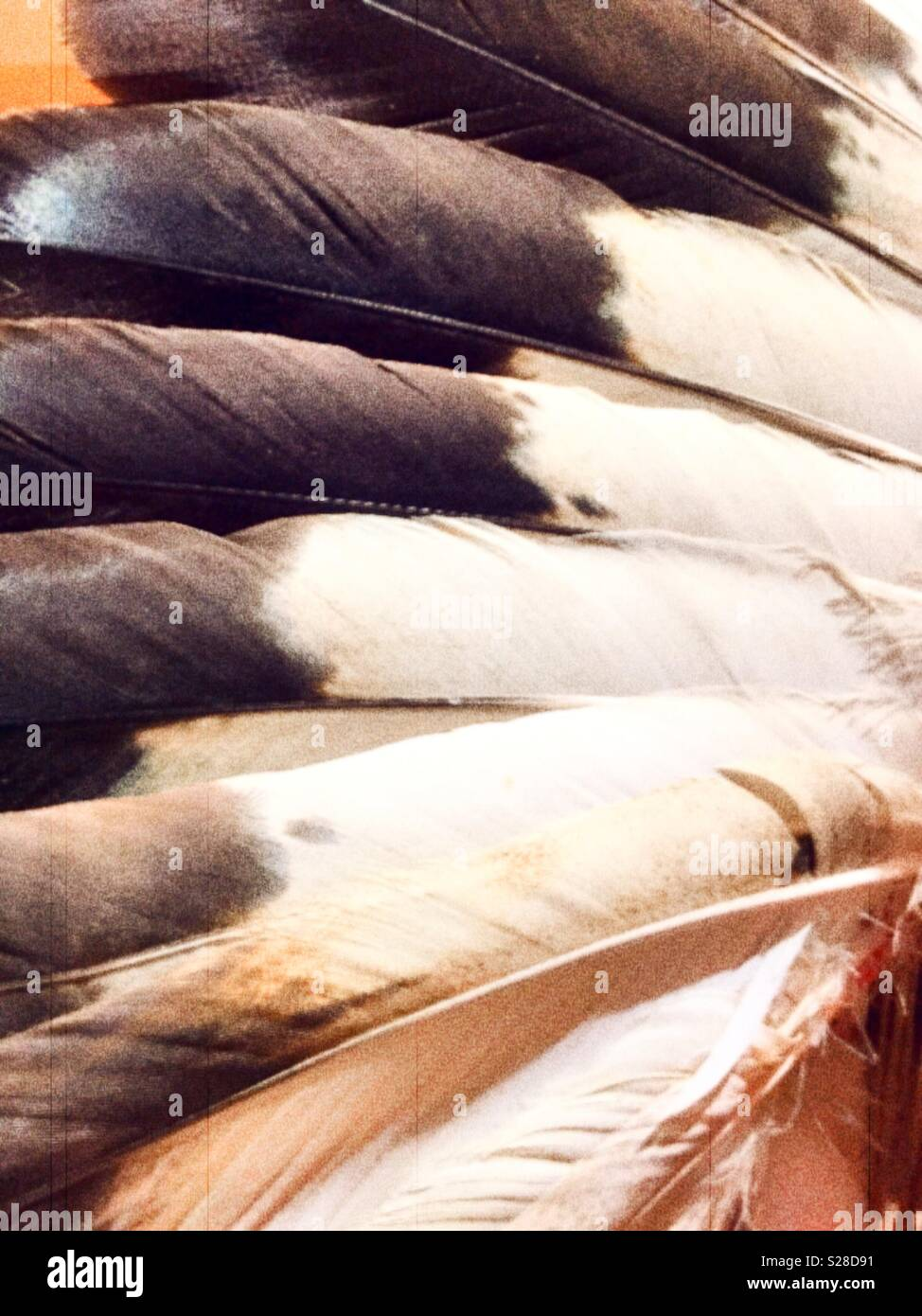 Close up of eagle feather Native American headdress, Montana, USA - Stock Image