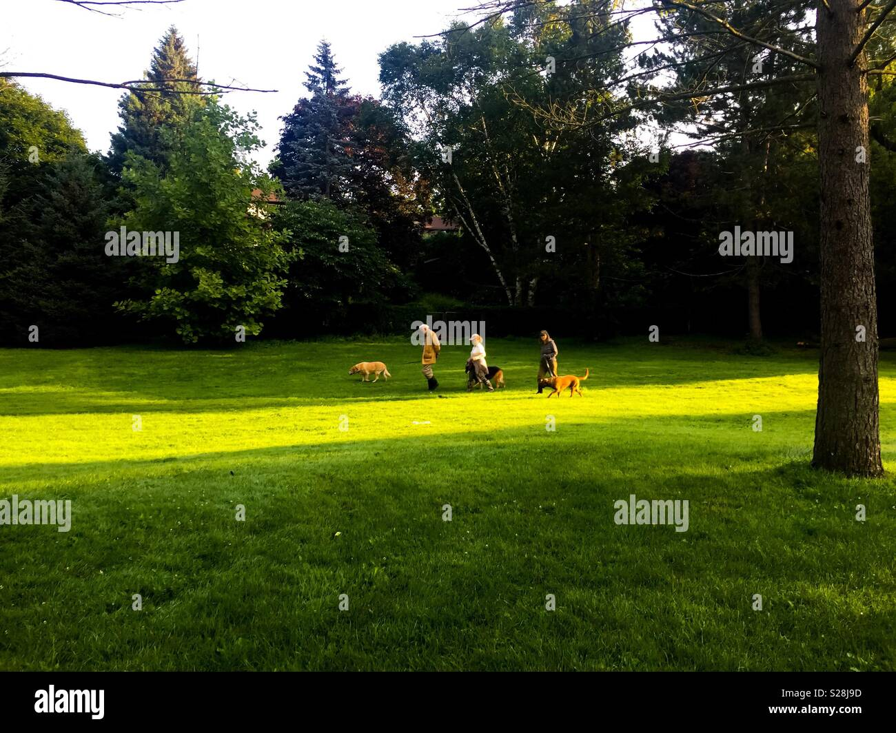 Dog walkers in a park - Stock Image