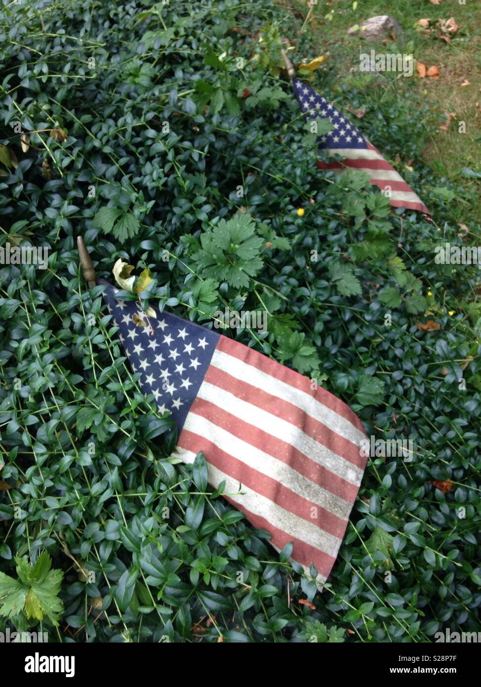 Two worn out American flags becoming overgrown by foliage, but still standing. - Stock Image